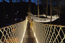 Wood Bridge Orchid Forest, Jembatan Ter-instagramable di Lembang | Genpi.co - Palform No 1 Pariwisata Indonesia