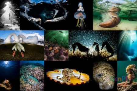 Gelar Underwater Photo Competition, Kemenpar Gandeng Sea Safari Cruises