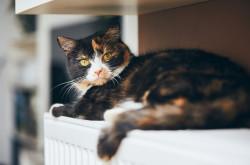 Kucing dengan COVID-19 Ditemukan di Belgia, Bisa Tulari Manusia?   Genpi.co - Palform No 1 Pariwisata Indonesia