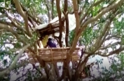 Takut Tertulari Corona, Masyarakat India Isolasi di Atas Pohon   Genpi.co - Palform No 1 Pariwisata Indonesia