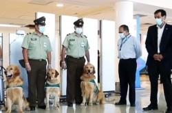Di Chile, Anjing Dilibatkan Deteksi Virus Corona   Genpi.co - Palform No 1 Pariwisata Indonesia
