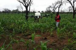Drone Bantu Petani Ghana untuk Menjaga Tanaman dari Hama | Genpi.co - Palform No 1 Pariwisata Indonesia