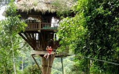 Hutan Danau Toba Rusak, KLHK Lakukan Rehabilitasi