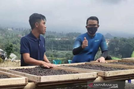 Untung Menggiurkan, Pemuda Temanggung Kembangkan Kopi Lokal