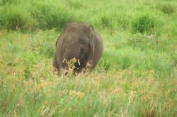 Api Berhasil Dipadamkan, 50 Gajah Selamat dari Karhutla   Genpi.co - Palform No 1 Pariwisata Indonesia