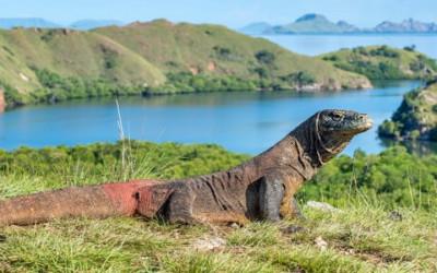 10 Pulau Terindah Dunia, Salah Satunya Ada di Indonesia Lho!
