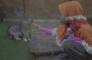 Ajak Anak Wisata Edukasi dengan Kelinci di Orchid Forest Cikole