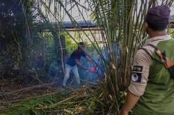 Patroli di TN Zamrud, BBKSDA Riau Musnahkan Tanaman Sawit Liar | Genpi.co - Palform No 1 Pariwisata Indonesia