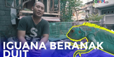 SIMSALABIM, Ternak Iguana Jadi Duit – DO IT